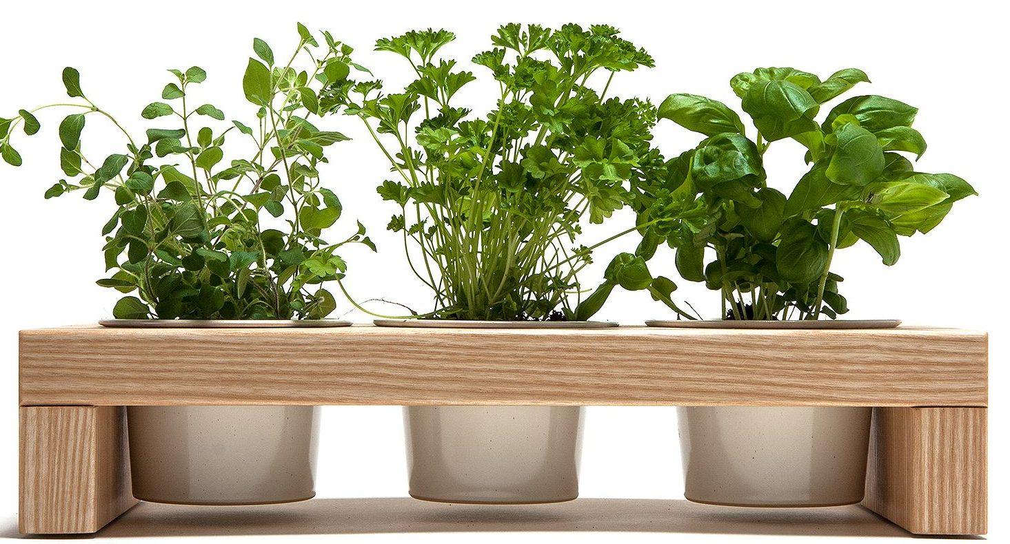 ogródek ziołowy w domu