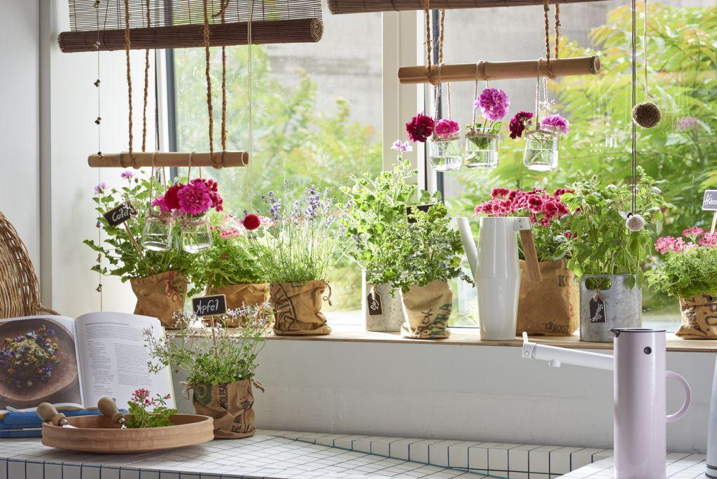 ogródek ziołowy w doniczce