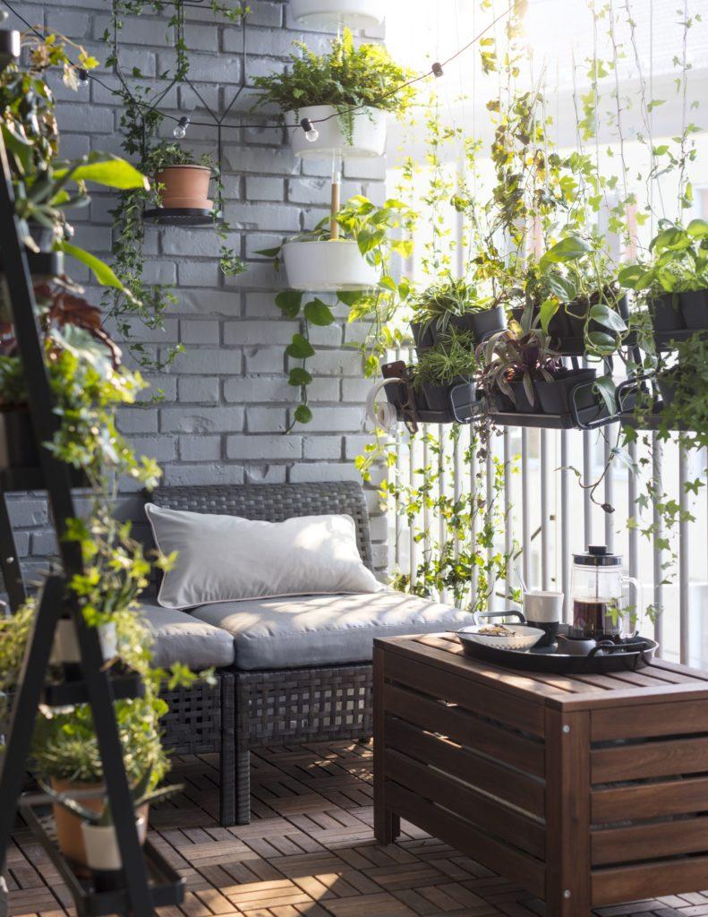 rośliny domowe na balkonie