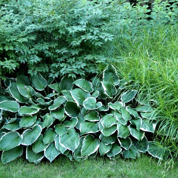 Warto zestawiać ze sobą rośliny o zróżnicowanych liściach, kolorach i pokroju np. funkia, parzydło leśne i trawy.