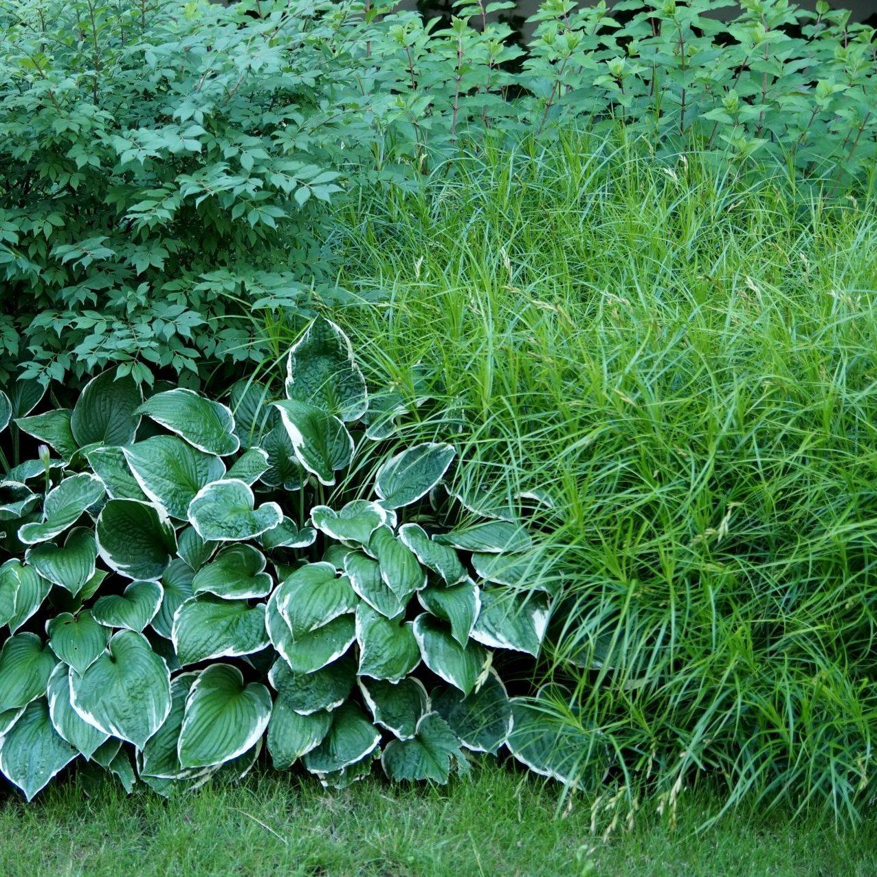 Trawy nadają kompozycji lekkości.