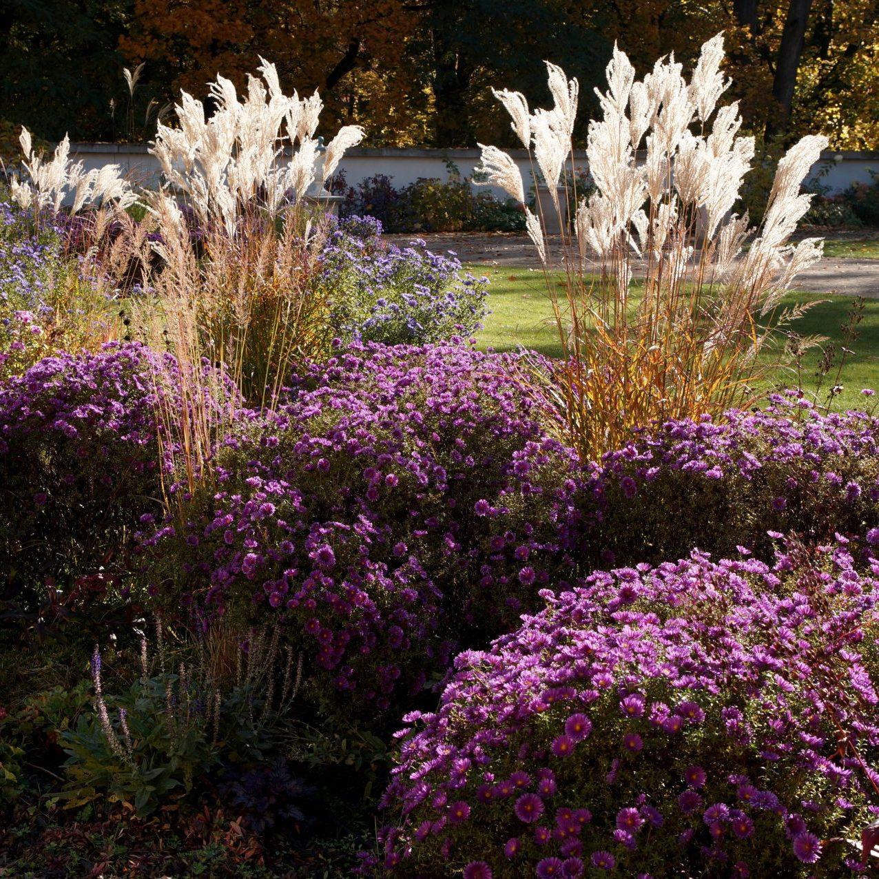 Trawy ozdobnie pięknie prezentują się na jesiennej rabacie.