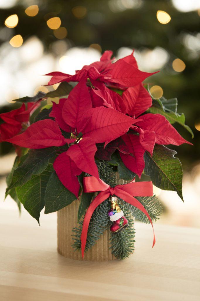 świąteczna dekoracyjna osłonka