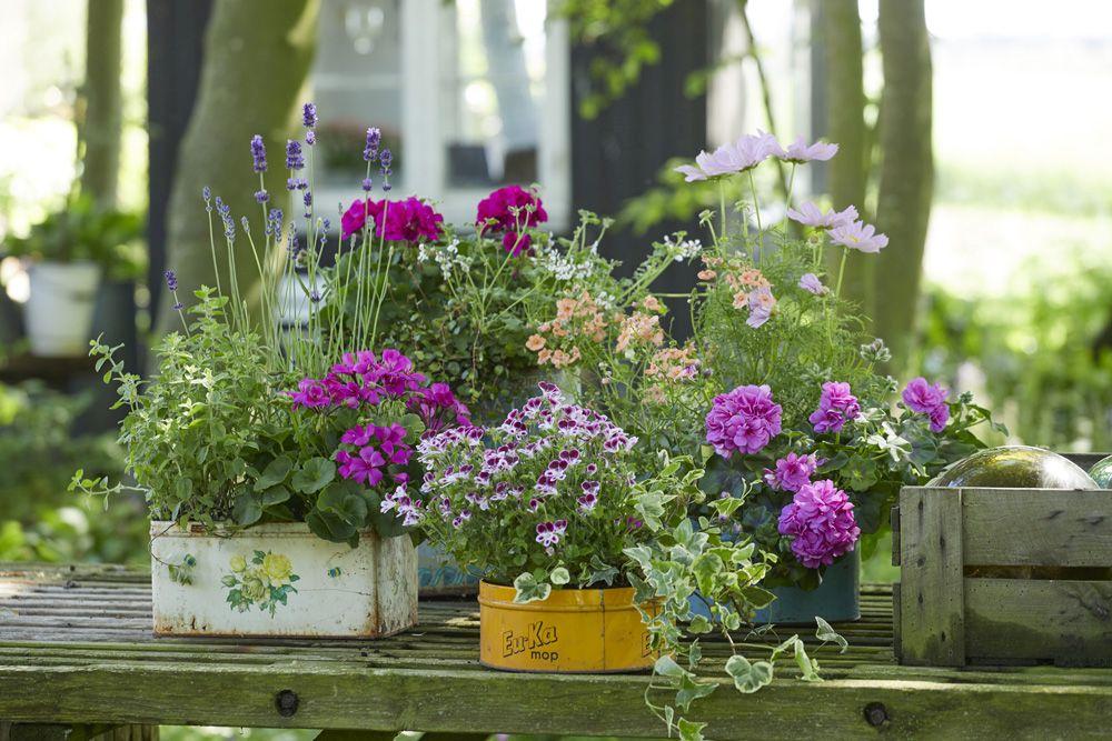 wiosenne kwiaty na balkon