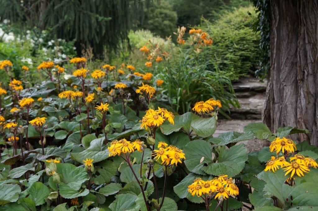 ogród atrakcyjny latem