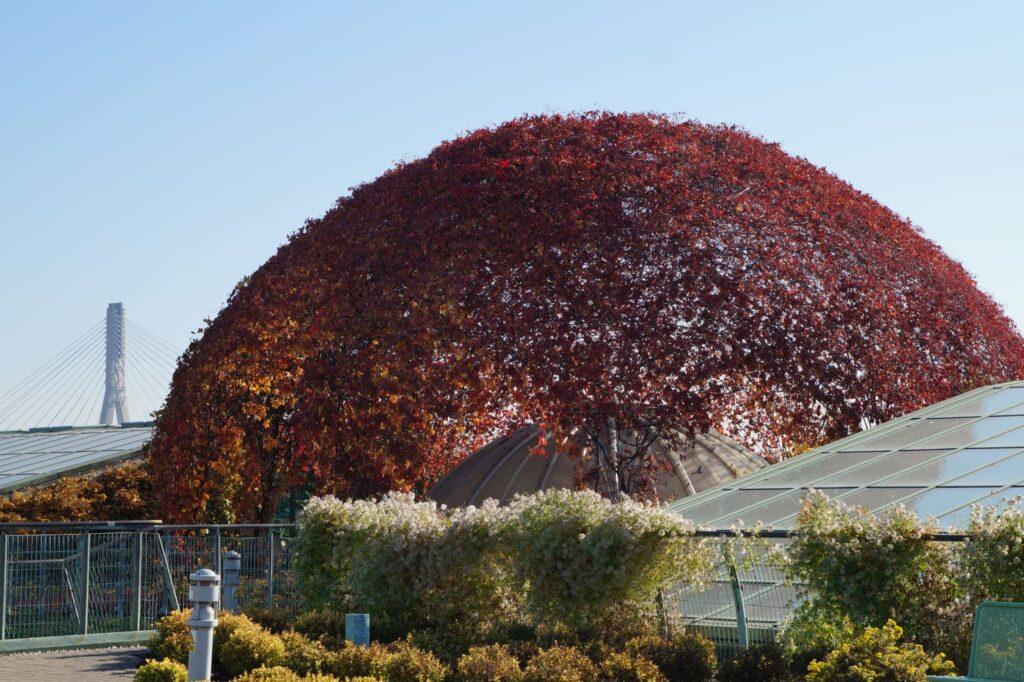rośliny atrakcyjne jesienią