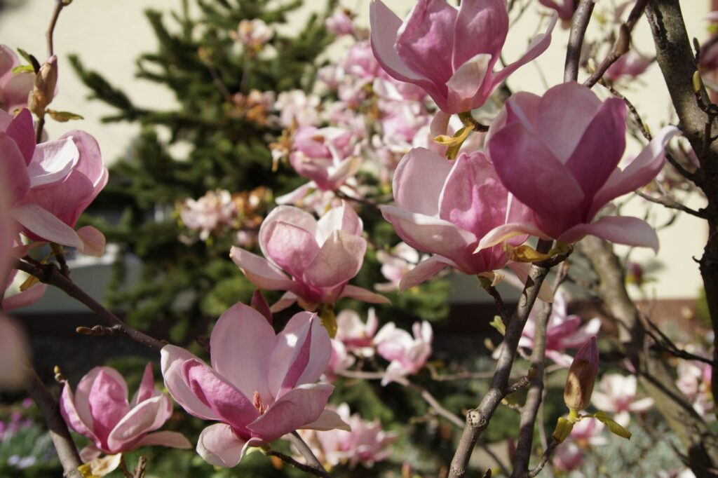 rośliny atrakcyjne w ogrodzie