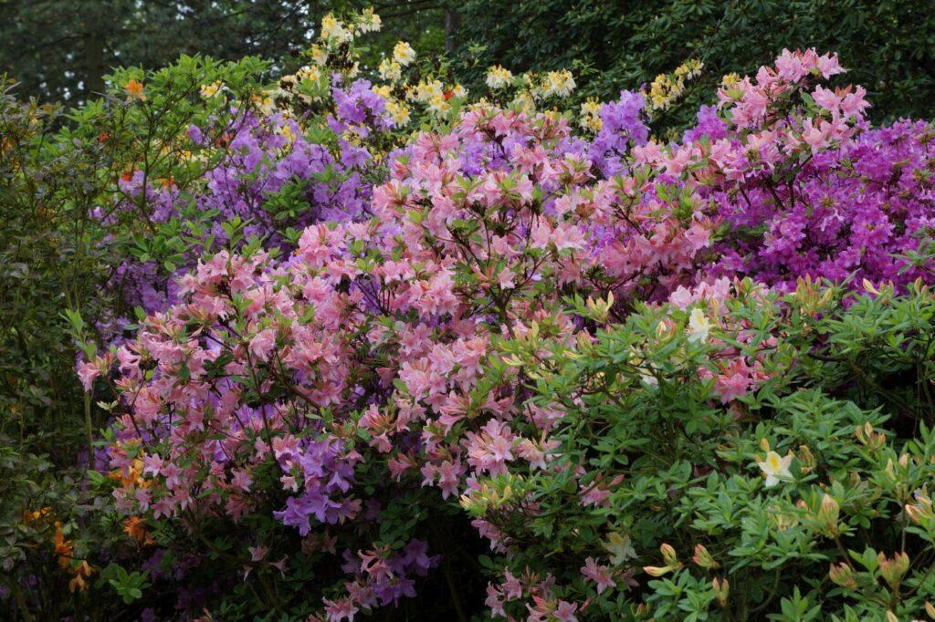 ogród w maju i czerwcu