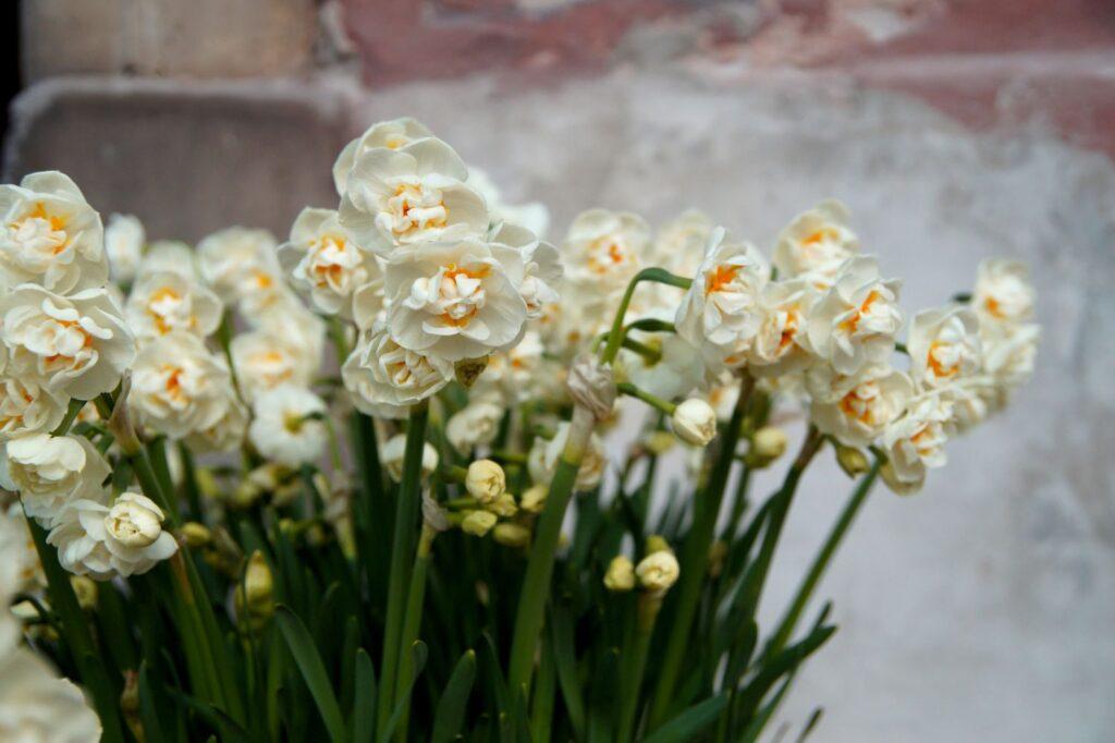 kwiaty wiosenne w donicach