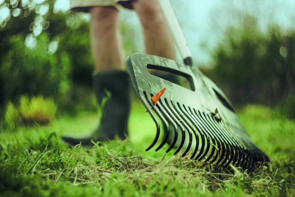 grabie do trawnika